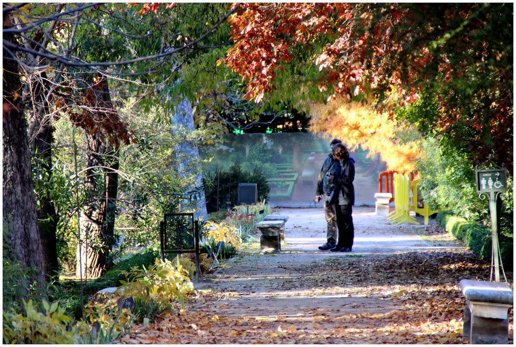 del Jardín Botanico de Madrid en noviembre de 2013-210
