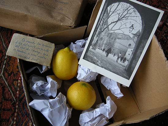 Golden apples from Mallorca
