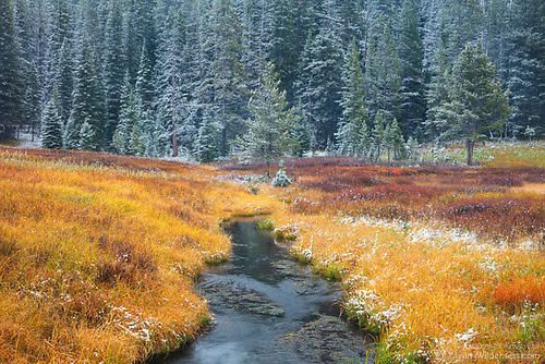 First Snow, Warm Creek, Yellowstone National Park, Wyoming