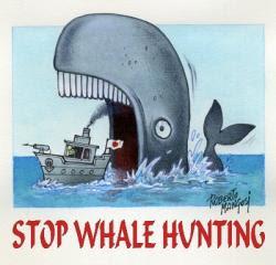 balena caccia illegale