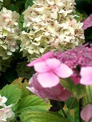 fleurs prises le 7 aout