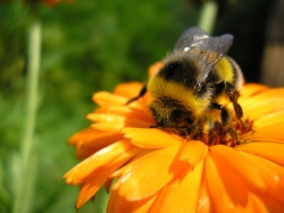 Free Cute Bumble Bee, Download Free Clip Art, Free Clip ...