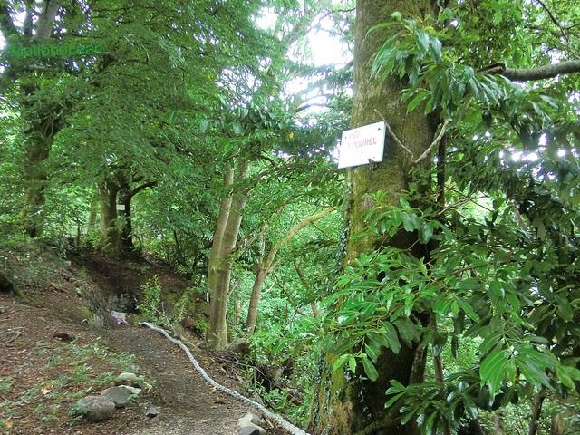 Squirrel path