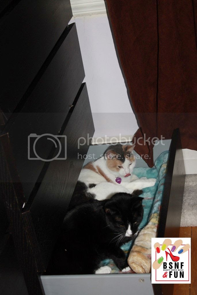 photo Cat Drawer-10_zpssbbbpfav.jpg