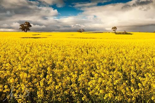 Canoloa Fields - Wollogorang NSW