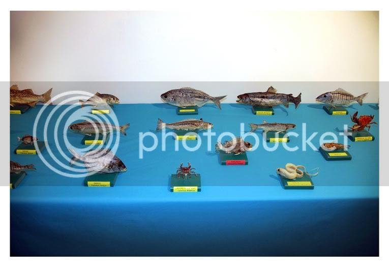photo peces01.jpg