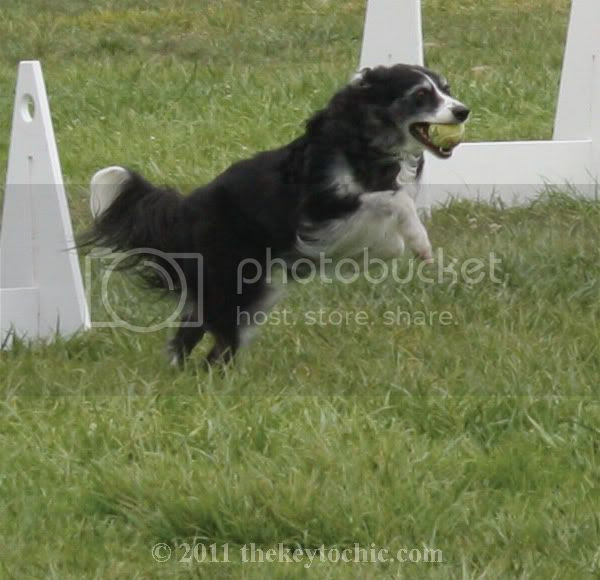 dog agility competition, Pooch Parade