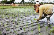 Ikatan Alumni Fakultas Pertanian USU Ungkap 5 Masalah Petani Indonesia