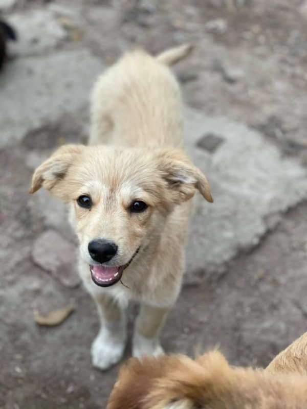 Benny – 3-4 month old male Cross-Breed
