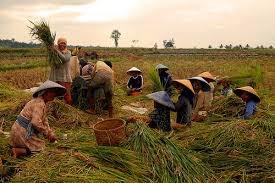 Kegiatan Ekonomi Penduduk Indonesia Lengkap Awalilmucom