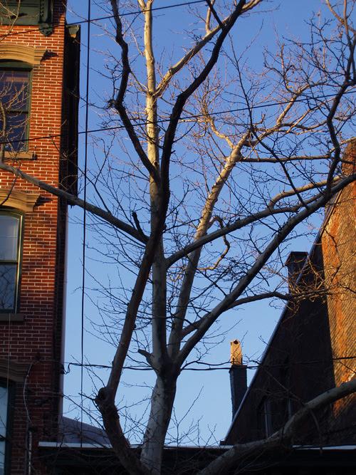 a tree between buildings