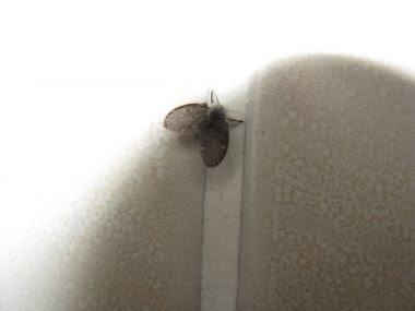 hout beton schutting: Kleine zwarte vliegjes bestrijden