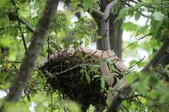 nest 071