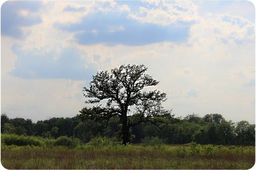 tree alone web.jpg