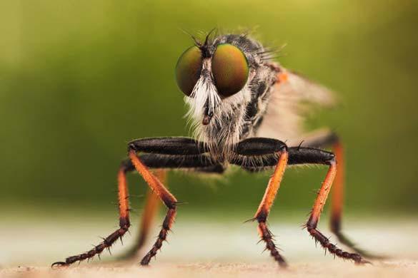 Εκπληκτικές macro φωτογραφίες εντόμων (16)