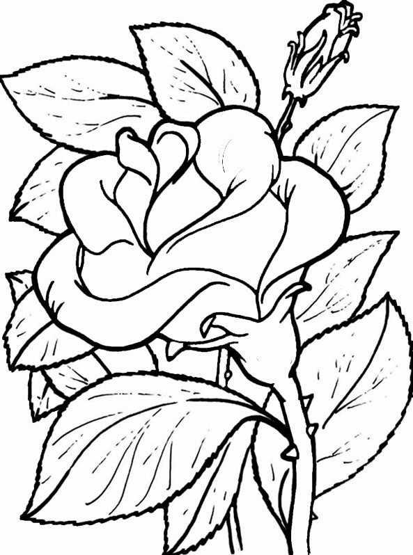 Blumen 12 | Ausmalbilder Kostenlos