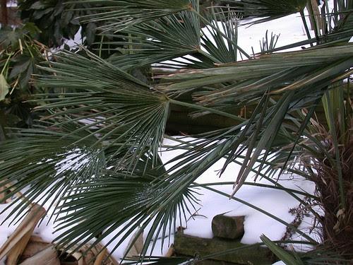 Freeze-dried palm fronds