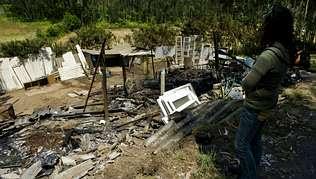 Matan 17 perros al prender fuego a un refugio de animales de Ferrol
