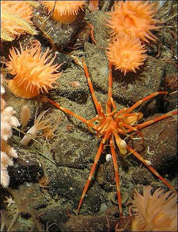 Marine life thrives deep underwater
