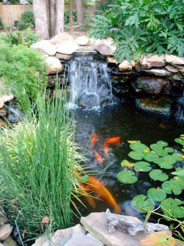 backyard-pond-water-garden-2