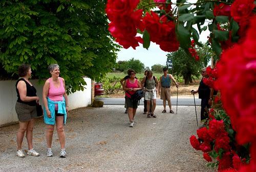 Fantastiska roser vid Cavas Rovellats