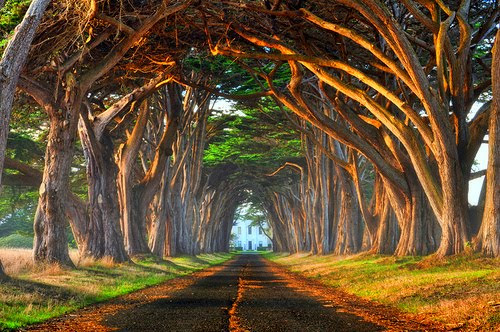 Tree Tunnel, Pt. Reyes, California