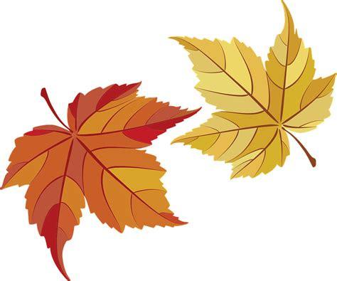 gambar makna keindahan daun maple gambar  rebanas rebanas