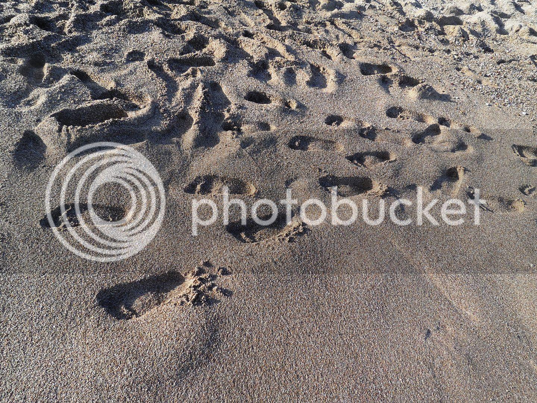 photo Foot print on the beach_zpsl7y63yxj.jpg
