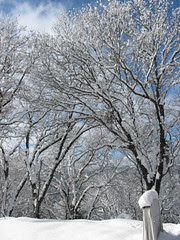 snow dec 09