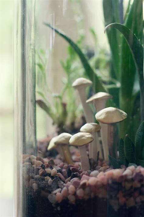 DIY: Terrarium Mushrooms   Wit & Whistle