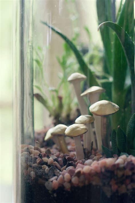 DIY: Terrarium Mushrooms   Wit & Whistle