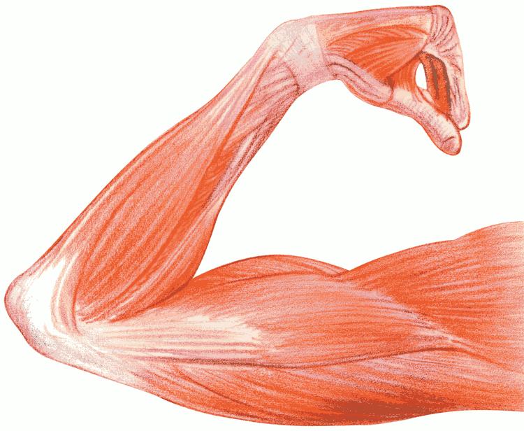 Applied Kinesiology - Inner Vitality Qigong