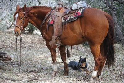 Horse Photos Cowboy Showcase