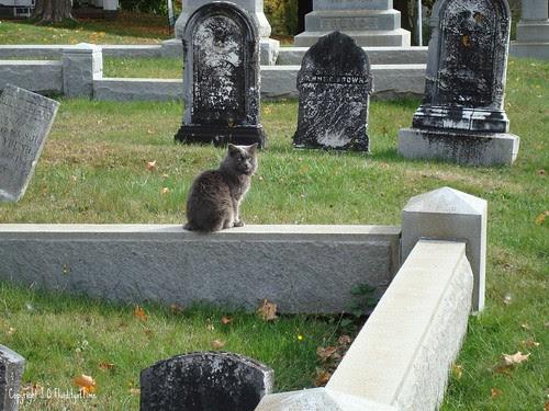 cat in Maine cemetery