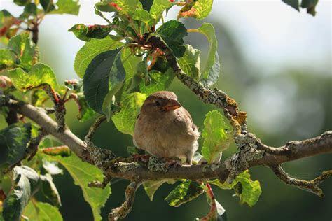brown bird  tree branch  daytime  stock photo