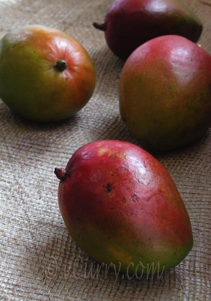 Mango 2 (1)