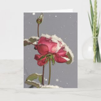 Snow Rose - red rose with snow cover card