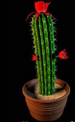 The potted plants - cactus flower