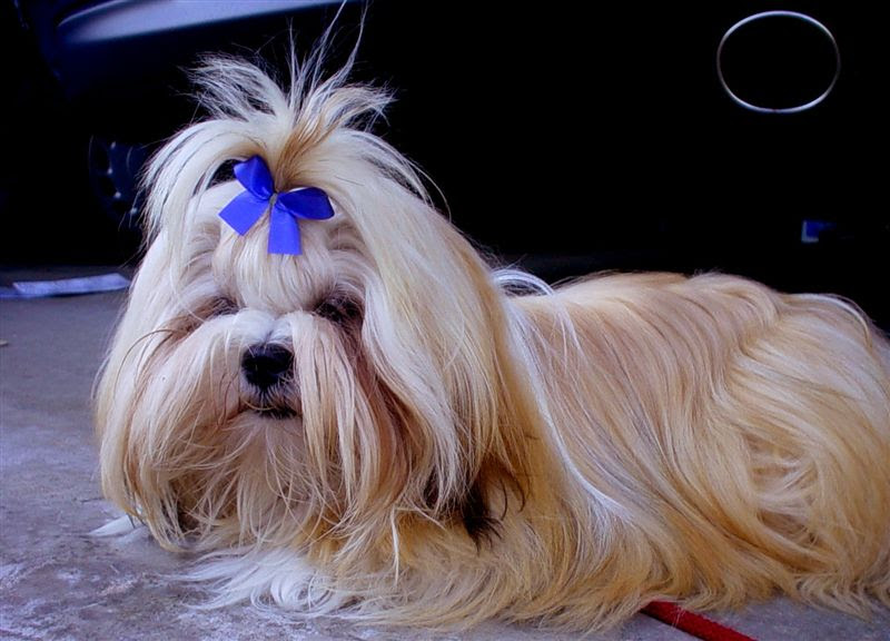 Cute Small Dogs That Stay Small - List Of Small Dog Breeds