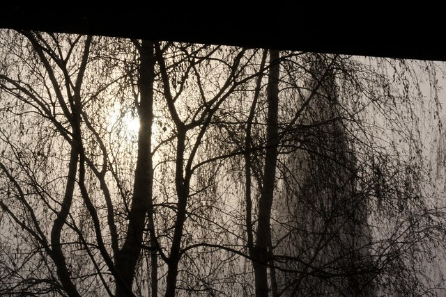 winter fog, december '09