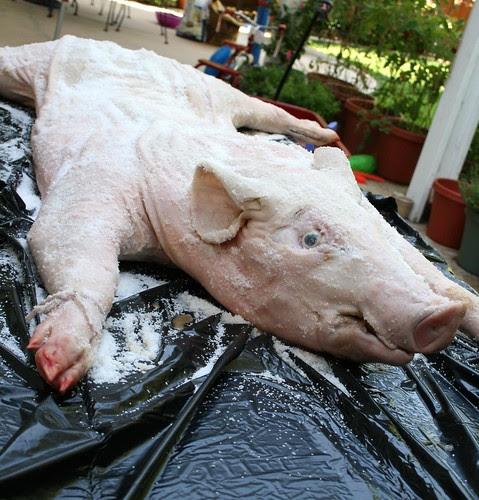 Salted pig