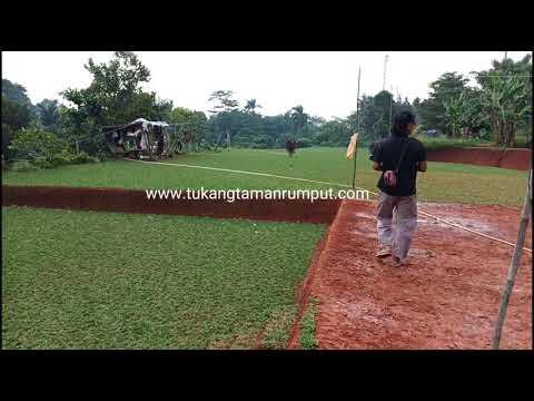 Jual Rumput Gajah Mini Murah
