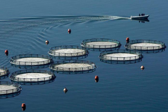 Ποια δικαιολογητικά απαιτούνται για άδεια ίδρυσης μονάδων υδατοκαλλιέργειας -