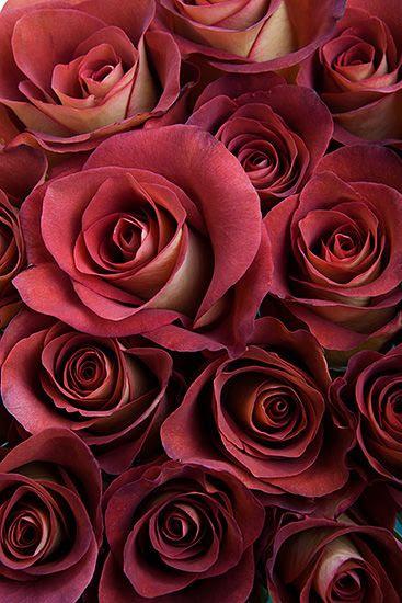 Leonidas Roses