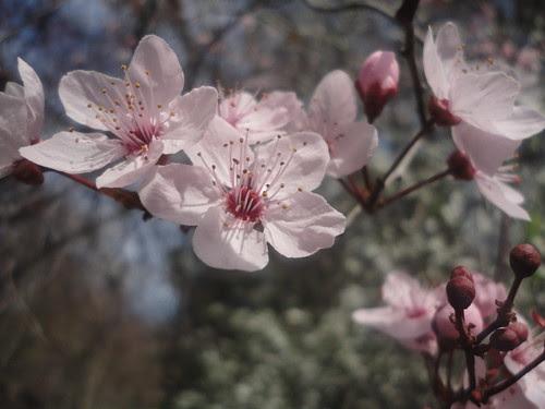 Flores en el retiro