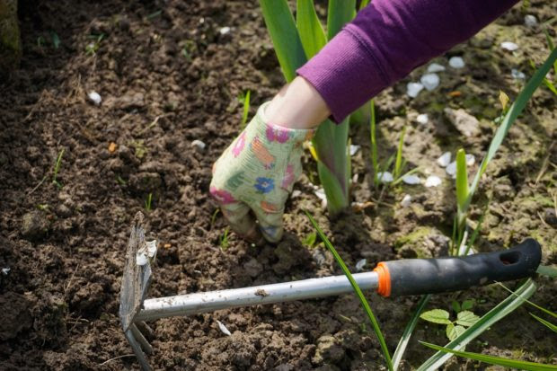4 Tips To Improving Your Garden on Your Own
