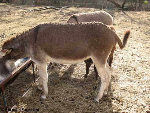 The Daily Donkey 29