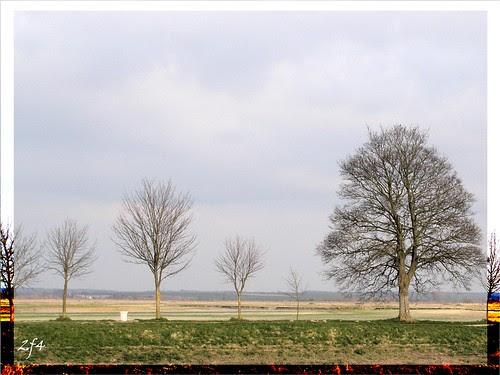Des arbres dans la baie
