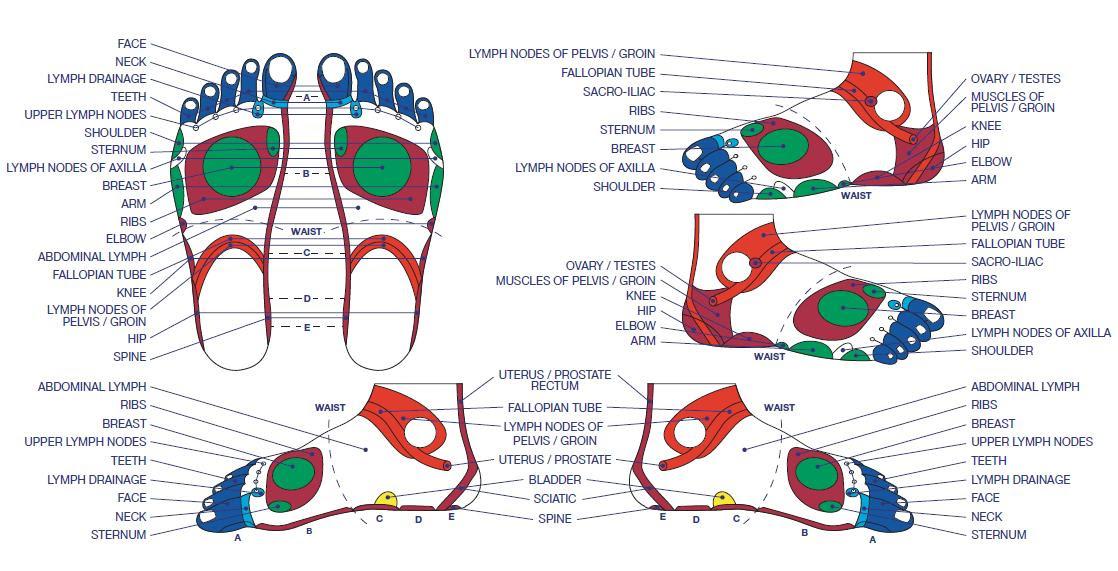 Gratis Download 5 Best Foot Reflexology Chart! (Updated: 2018)
