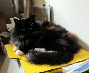 Quality-Inspector-Cat